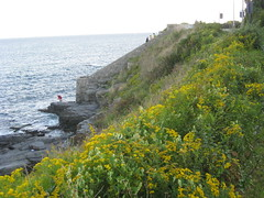 Cliff Walk Near the Mansions of Newport, Rhode Island