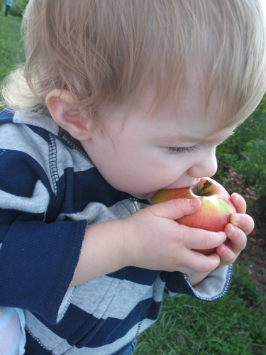 Apples08 2
