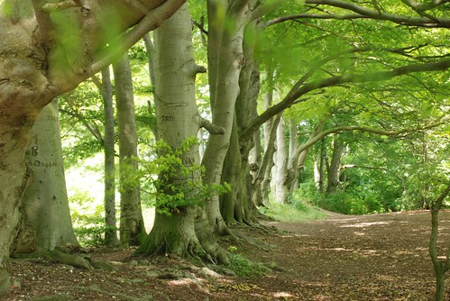 1 acre - beech trees