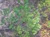 Plant 2 (cobalt.penguin) Tags: beach dunes sydney peninsula avalon barranjoey