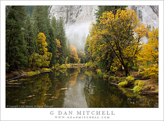 Autumn Color, Merced River (G Dan Mitchell) Tags: california travel cliff usa mountain reflection tree green nature water yellow fog forest river landscape gold nationalpark log oak grove stock scenic meadow bank merced shore valley yosemite elcapitan induro gdanmitchell