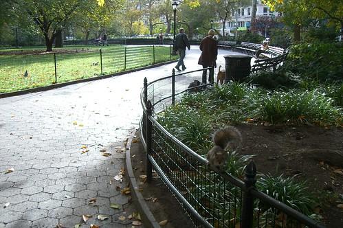 squirrel in madison park