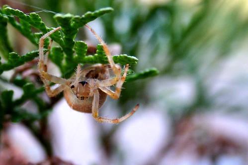 Spider B, I