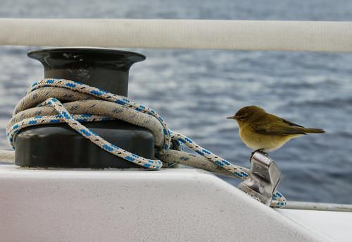 Clandestino a bordo