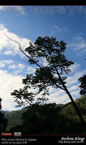 你拍攝的 20081115數位攝影_阿里山之旅081.jpg。