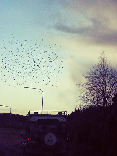 Fåglar på väg