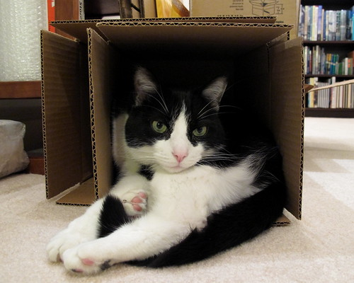 Oliver in a Too-Small Box