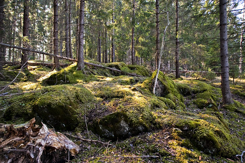 Random woods