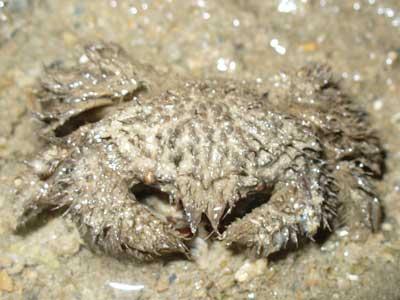Crab-P1060665