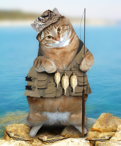 Catfishing ~(CatChallenge#34)~
