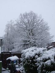 Surrey Snow #2