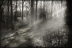 The Path We Take (mikonT) Tags: light fog woods nikon alone path d300 firstquality imagepoetry mikont nikon1755mm28 citrit