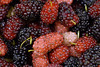 ماتت زهور العشق,,ياحبة التوت (aZ-Saudi) Tags: pink sweet arabic delicious cranberry saudi arabia sour mulberry ksa لذيذ حلو وردي توت حامض احمر عسل arabin acidulous فرصاد ِarabs