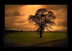 Sunset tree (seve2) Tags: trees sunset tree nature clouds landscape nikon cannock rugeley naturesfinest d80 aplusphoto treesubject bigpicture2008 bigpicture2008stokeandstaffordshire qualitypixels