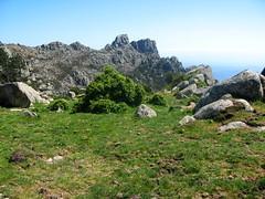 Fin de la trace au pâturage sur le parcours Arjetu - Morello : vue vers Bitalza
