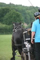IMG_3713 (Tony Golding) Tags: show horses horse canon eos flickr working may trust shire heavy 2008 31 rare drafthorse singleton breeds workinghorse heavyhorse 400d canon400d tonygolding heavyhorsephotography forgetmenothere