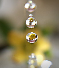 Refraction in mid-air (believer9) Tags: flower macro water yellow closeup drops refraction breathtaking waterdropsmacro breathtakinggoldaward amazingmacros superamazingmacrosaward