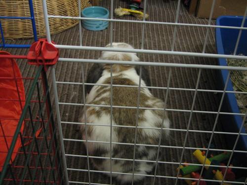betsy behind bars