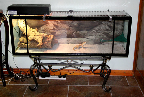 Diy Aquarium To Beardy Vivarium Conversion Bearded Dragons Flickr