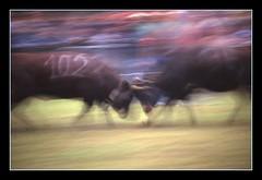 Le regine (Sandro Lombardo) Tags: veterinarifotografi
