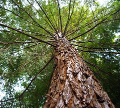 Spokes (jhhwild) Tags: tree branches spokes topic photoskillz
