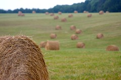 Hay You, out there on your own