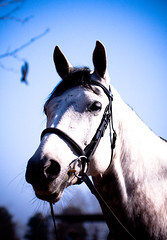 I'm all ears (Axel Bhrmann) Tags: horse ride country moore jockey base halter whitehorse equine gallop horsejumping lightroom showjumping goldfrapp deryn girlrider horserding 10millionphotos womanrider womenriders tenmillionphotos inanda womenrider rideawhitehorse archee lightroompreset lightroompresets boerperd femalerider unlimitedphotos inandacountrybase axelbhrmann yola4bc0zahors3s2