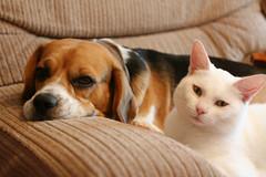 Love <3 (.Katy) Tags: dog white beagle cat together jak daxter