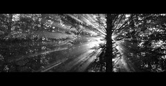 Black Hole Sun (Toni_V) Tags: bw sun nature monochrome sunrise landscape schweiz switzerland blackwhite europe suisse hiking 2008 soundgarden glarus randonne d300 fronalpstock capturenx toniv superhearts 16082008 bwartaward toniv 1685mmf3556gvr