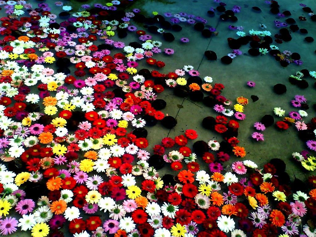 Flowers In The Water ddd