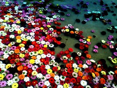 Flowers In The Water ♫♪♫ (Jesús Gutiérrez Gómez) Tags: flowers water colombia jesus jardin botanico gutierrez medellin gomez the colorphotoaward colourartaward sonyericssons500i