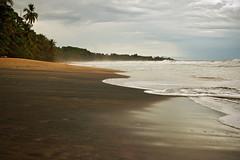 Black sand beach - Manzanillo - Costa Rica (PascalBo) Tags: sea mer beach nature landscape outdoors blacksand sand nikon costarica d70 sable palm palmtree tropical paysage plage manzanillo palmier centralamerica 123faves sablenoir amériquecentrale pascalboegli