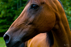 Trust is given (Raoul Pop) Tags: horse eye muscles animals canon neck nose flickr unitedstates head maryland trust jaws veins sabbath smugmug facebook canoneos5d googlephotos nearwhitesferry
