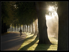 Sunbeams Avenue (Mike Ashton) Tags: park morning trees sun mist shrewsbury cycle sunbeams shropcommcharitydrive