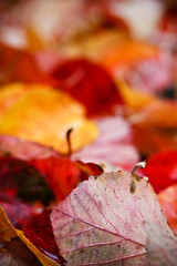 red-bokeh (ombrelle) Tags: autumn iris light macro eye fall colors leaves paper oak close herfst experiment warhol geel trex indianajones eik naturesfinest