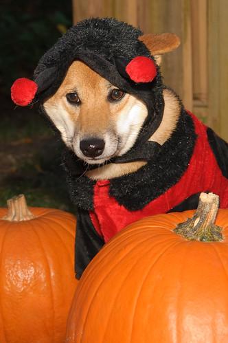 0810Pumpkins & Pets003-99
