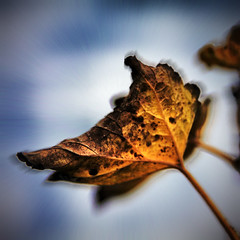 Az elsrgult levl (Balzs B.) Tags: autumn sky fall yellow canon leaf fourseasons g srga kk levl canonef24105mmf4lisusm 40d tkgroup bluesz