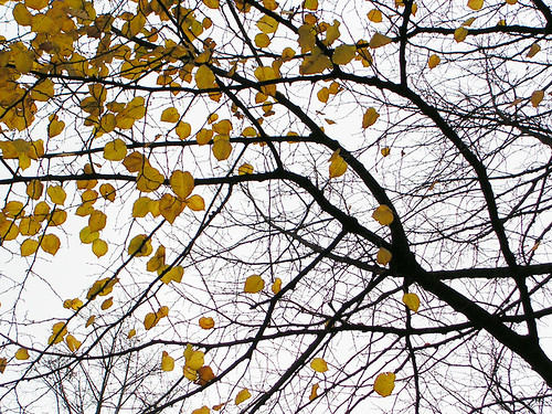 Herbst, oben