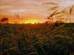 Warm and Late (Liquid Ice Photography) Tags: sunset michigan wheat fields