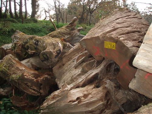 超大的木塊