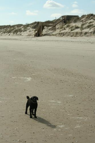 Let's Run on the Beach! - IMG_0333