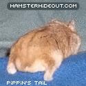 rhapsody_Pippinbutt