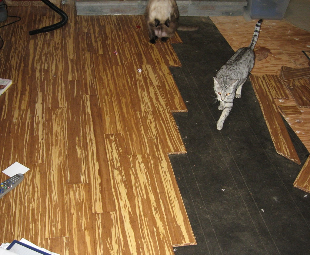 Bamboo floor going in. Kitties walking through.