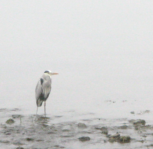 heron deep in meditation