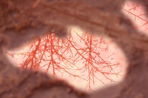 你拍攝的 20081116數位攝影_阿里山之旅139-3.jpg。