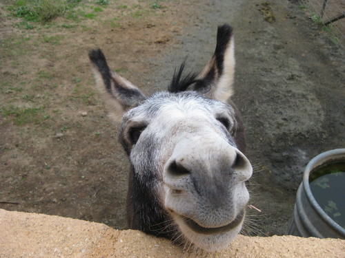 Ugly Donkey Face