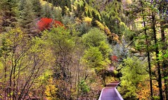 Autumn @ Jui Zai Gou -  (CharlieBrown8989) Tags: china trees red mountain plant green nature yellow forest canon yahoo interestingness woods bravo flickr track zoom picasa best explore pines jungle tele tamron charliebrown8989 corel xichuan endofautumn paintshopproxi zhuhongqu melaniezhu