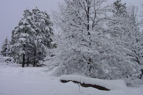 Snow 16Dec08 01