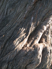 Tree Bark (shaire productions) Tags: wood old shadow brown abstract tree art texture nature closeup forest photoshop photo shadows natural image background arts free twist photograph bark creativecommons downloads download trunk layer opensource resource layering twisting royaltyfree t4l copyrightfree textureforlayering textureforlayer artistresource