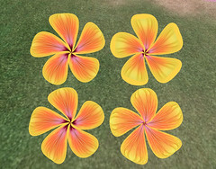 Flower Petals (Yellow & Orange)